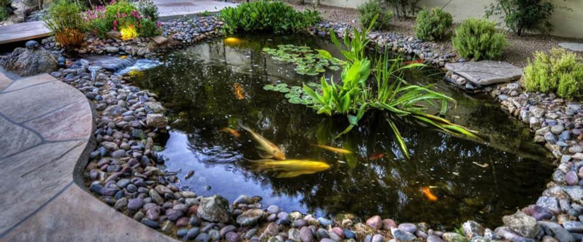 commercial pond maintenance services