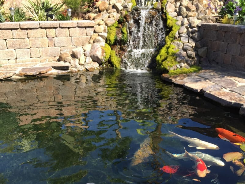 in ground koi pond with mossy green water fall