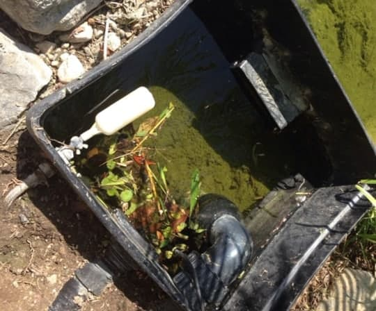 overgrown pond filter skimmer box needing a cleaning