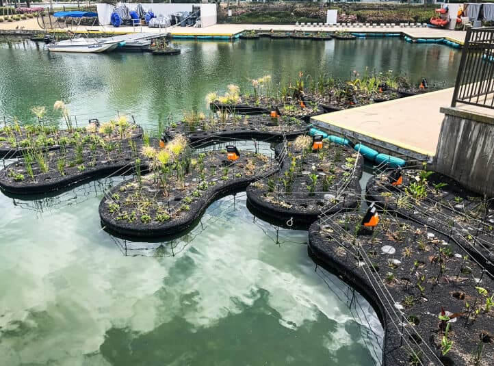 floating islands built to hold pumps in the middle of a pond